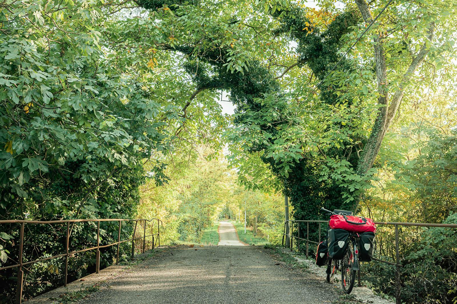 Vélo sous les arbres