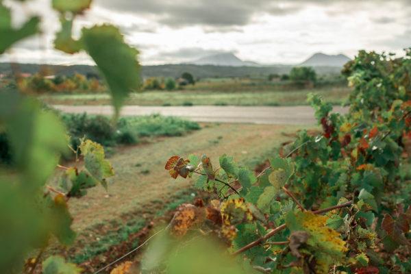 Des vignes aux couleurs d'automne en Provence