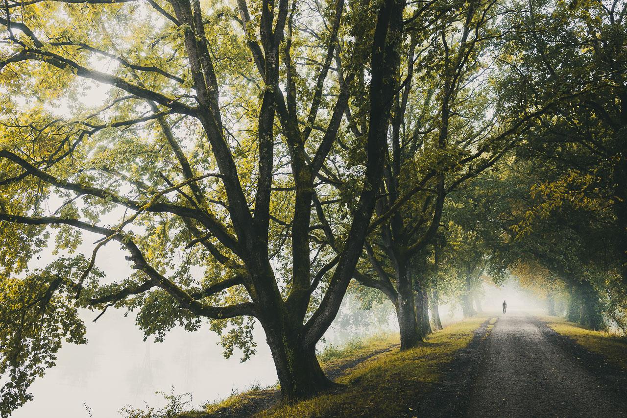Silhouette de promeneur dans la brume sous les arbres