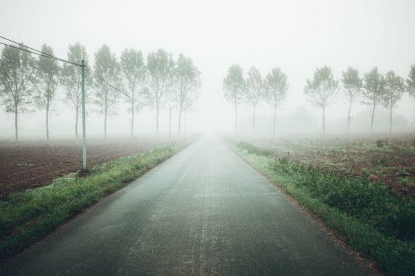Des arbres dans la brume