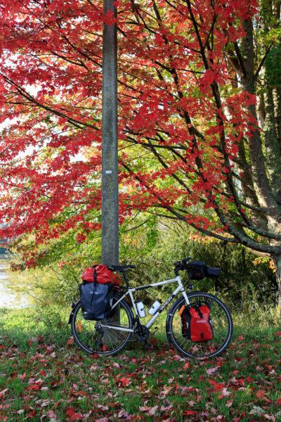 vélo posé sous l'arbre rouge