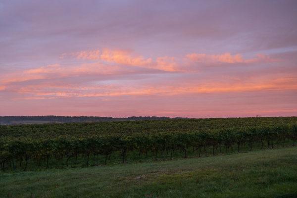 Aurore colorée sur les vignobles.